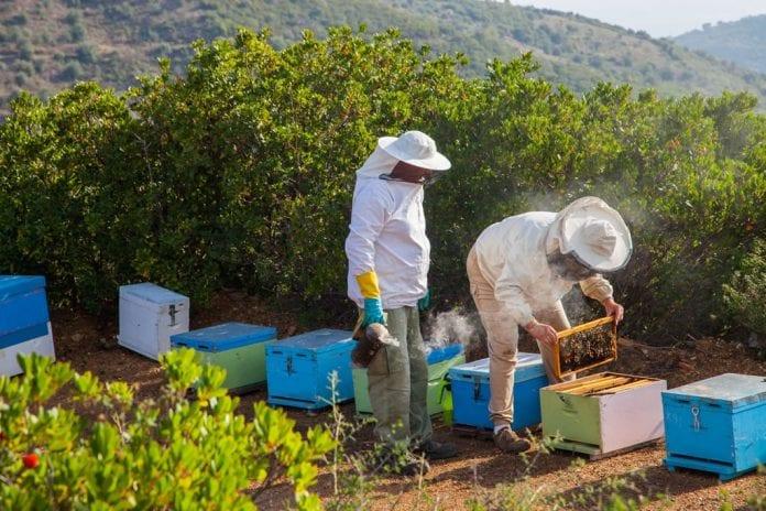 κυψέλες Κονδύλι μελισσοκομικά προγράμματα