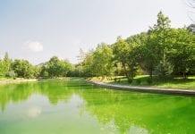 Κοιλάδα Σέρρες πράσινο