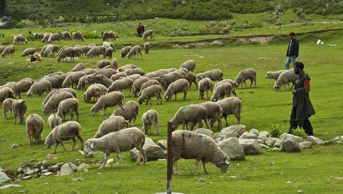 κτηνοτρόφοι Βοσκήσιμες Απογραφή γαίες Οφειλές Παράταση