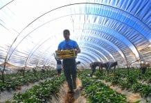 ΠΚΜ Νέοι Αγρότες