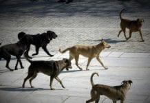 Αδέσποτα Σκυλιά Σέρρες Γρηγοριάδης ζώο