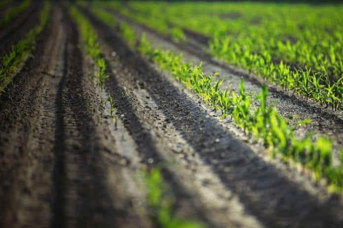 Βιολογικές ΟΠΕΚΕΠΕ πληρωμές κονδύλια Καλλιέργειες Αγροπεριβαλλοντικά Τζελέπης
