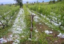 ΕΛΓΑ Στο θέμα των ολοένα και εντονότερων επιπτώσεων της κλιματικής αλλαγής που πλήττουν τους αγρότες καταστροφές Τζελέπης αποζημιώσεις