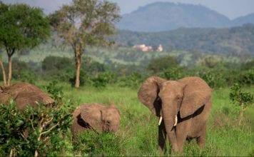 προστασία ελεφάντων