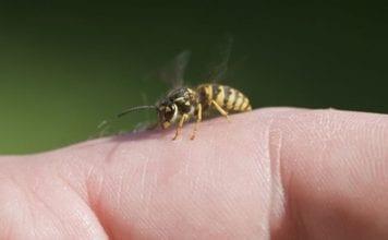 μέλισσα τσίμπημα