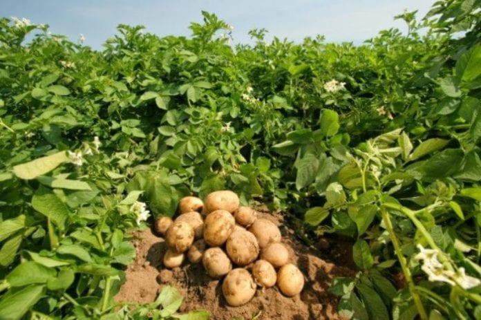 Πίστωση 19,2 εκατ. ευρώ κρατική ενίσχυση serrespost.gr πατατόσπορος πατάτας