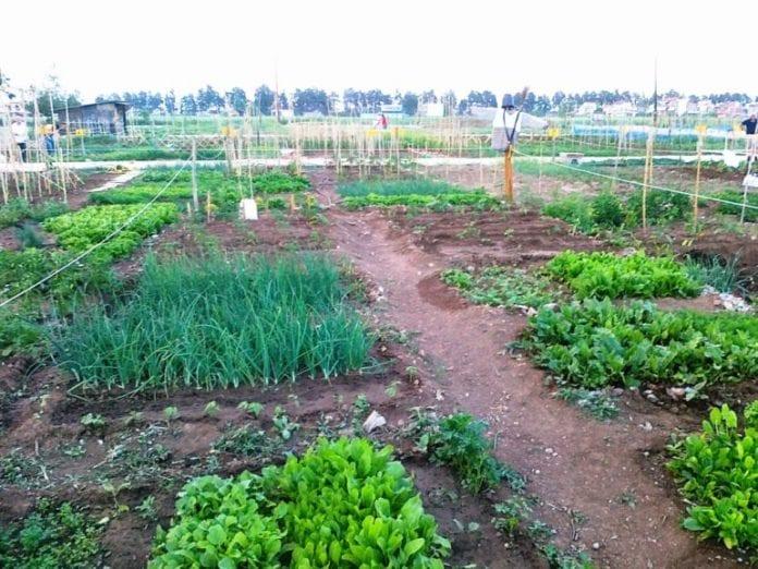 Λαχανόκηπος ο Δ. Σερρών για τον δημοτικό λαχανόκηπο Λαχανόκηπος