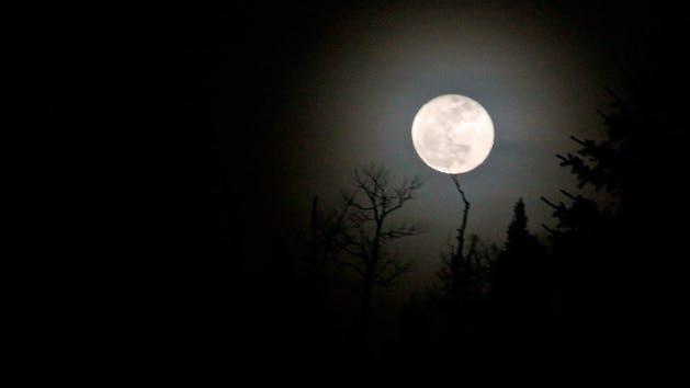 Σελήνη δέντρα