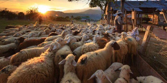 Κτηνοτρόφοι ζωικού κεφαλαίου