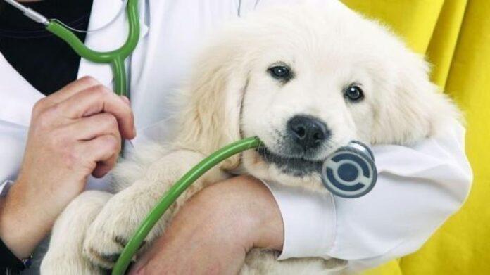 παροχή κτηνιατρικών υπηρεσιών